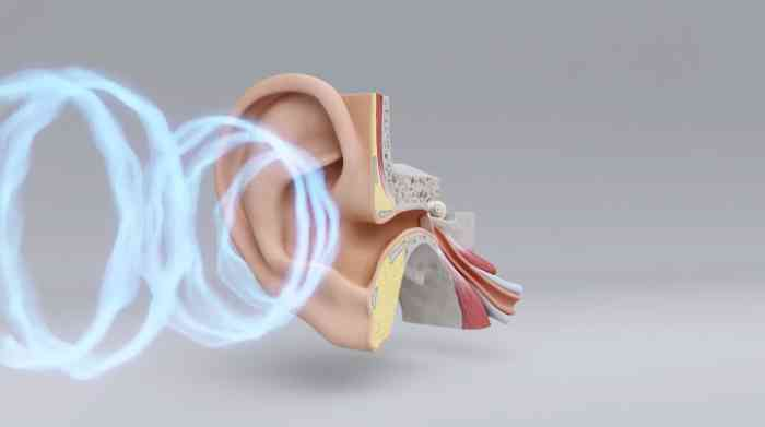 How hearing works in detail
